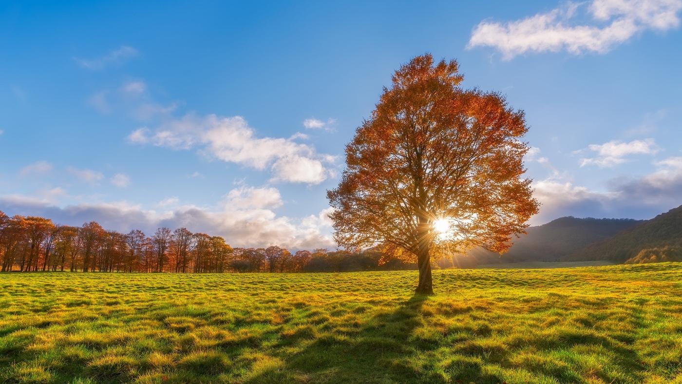 sunlight-through-the-autumn-tree-35322-1920x1080