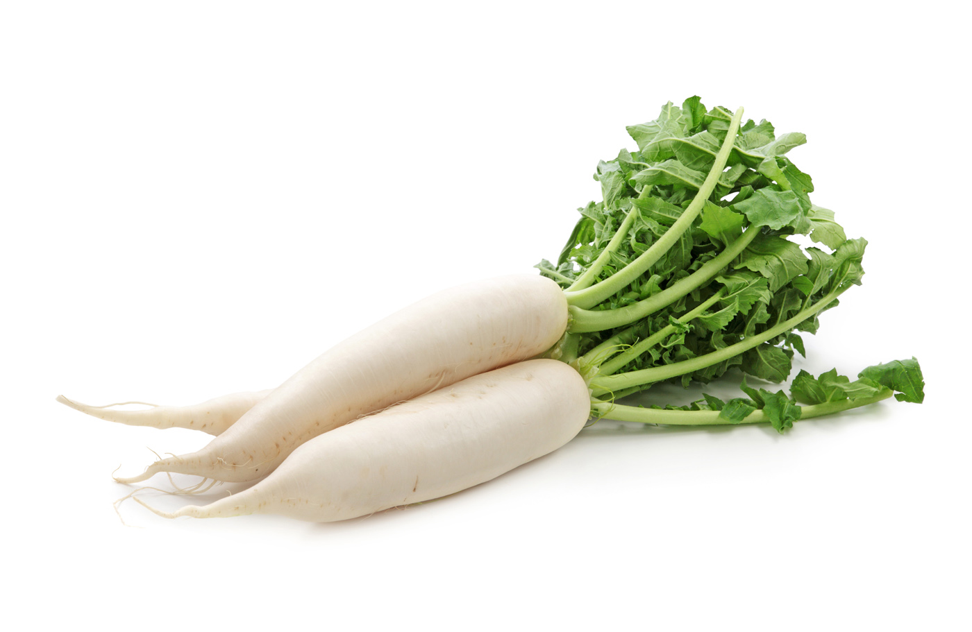 Daikon radishes isolated on white background