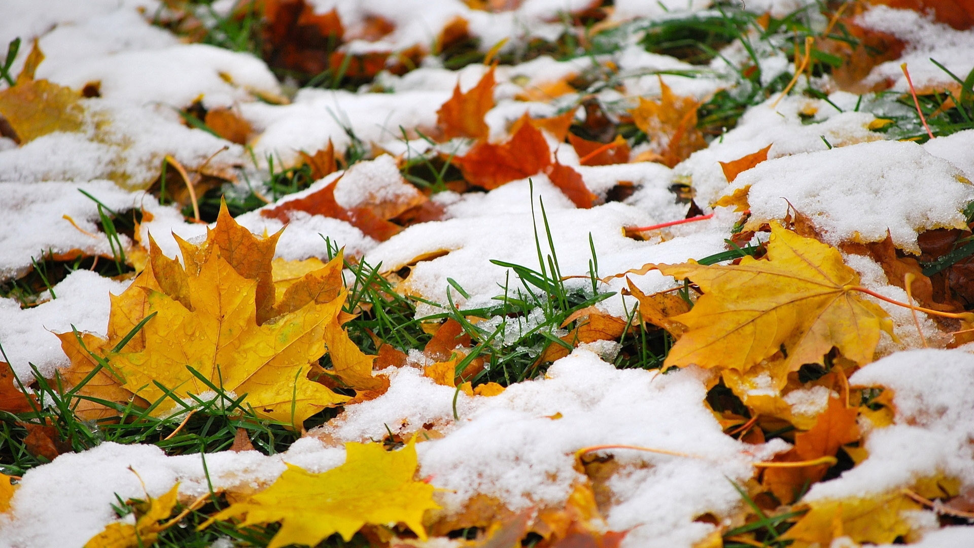 autumn-hd-mac-wallpapers-pictures-for-winter1180